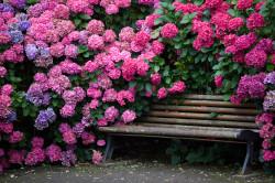 Цветущие уличные растения