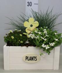Компощиция комнатные растения 25 см