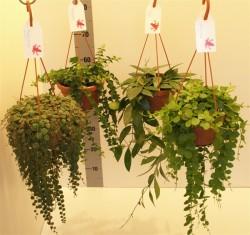 Overig hangplanten микс 70