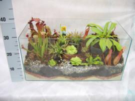 Террариум большой с плотоядными растениями