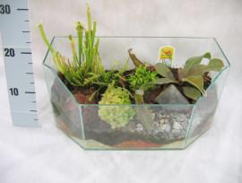 террариум с экзотическими растениями