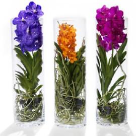 orhidei-buket-gollandii-optom-ukraina-buketi-iz-konfet-noviy-god-master-klass