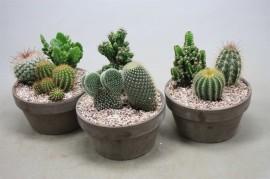 Композиция с кактусами