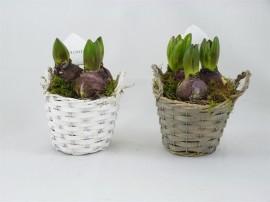 Растение в корзинке