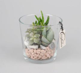 Флорариум стакан