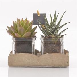 флорариум в квадратной вазе
