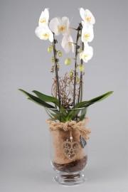 Орхидея тайна