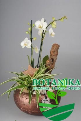 Фитокомпозиция Орхидея в горшке
