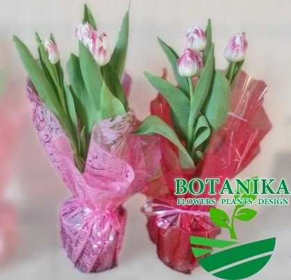тюльпаны в_горшке