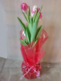 тюльпаны _в_горшке