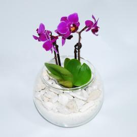 мини орхидея в камнях