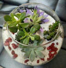 Суккуленты в флорариуме сверху
