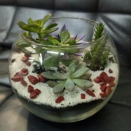 Суккуленты в флорариумы
