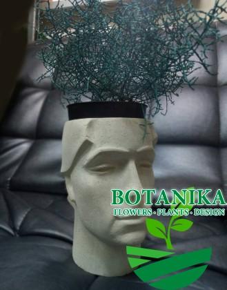 Голова с растением