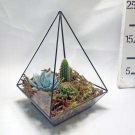 Флорариум-геометрический-треугольник
