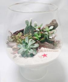 Флорариум морская природа