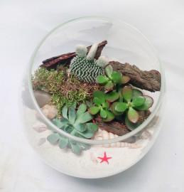 Флорариум морская природа 3