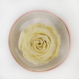 Стабилизировання роза желтая