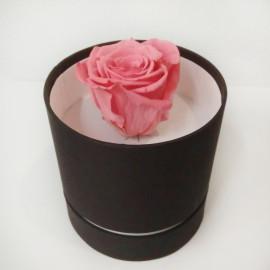 Стабилизировання роза красочная св