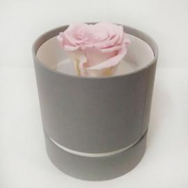 Стабилизировання роза розовая