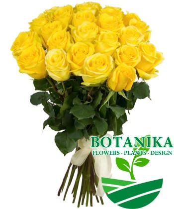 Букет желтых роз_25шт
