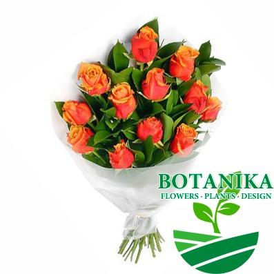 Оранжевые розы, 11шт