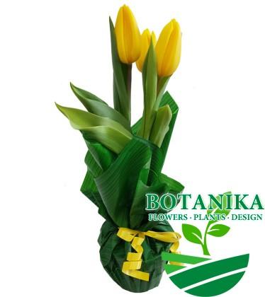 Тюльпан-желтый-в-зеленой-бумаге